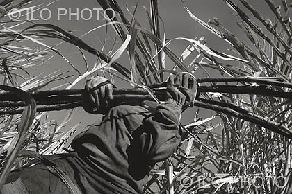 Sugarcane, São Paulo. Slave worker in a sugarcane camp. Thanks to the national commitment to improve labour standards in the sugarcane industry, a voluntary agreement between Government, industry and trade unions on minimum standards was launched in June 2009 by the Government. This photo is from the book