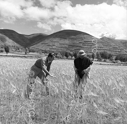 Miguel Ximenez, an engineer agronomist, at the Andean Programme's