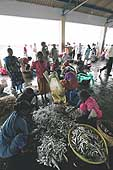 Fish market in Mangalore. Sorting out fish coming directly from the boats.
