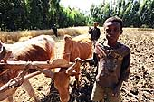 Children working in the fields. Ethiopia.