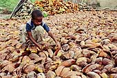 Child harvesting and drying coconut before taking it to market. Tanzania.