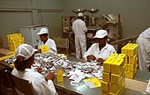 Packing tablets. Kinapharma pharmaceuticals. World Bank loan recipient. Accra, Ghana.