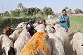 Cairo. Young sheep farmer.