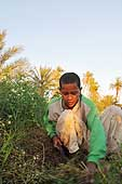 Egypt. Work in the fields.