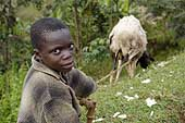 Young cattle keeper. Rwanda.