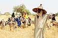 Taking care of the cattle - Niger