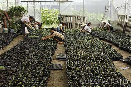 Chengdu china hombres y mujeres trabajando en el vivero for Definicion de vivero