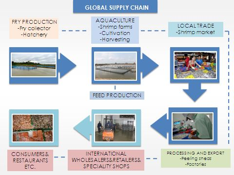The shrimp supply chain