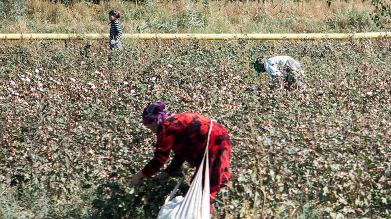 ILO monitoring of the cotton harvest in Uzbekistan
