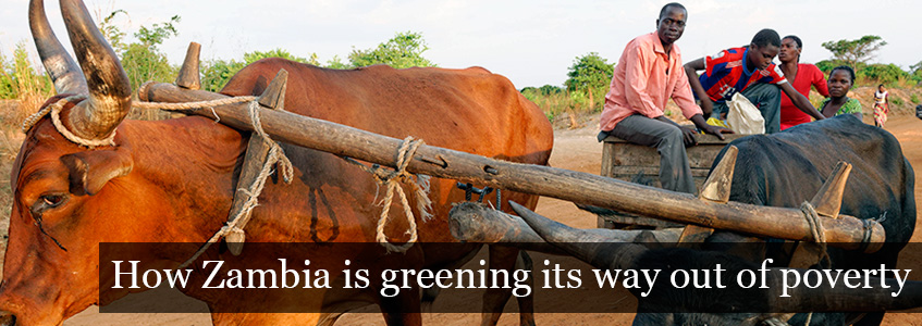 How Zambia is greening its way out of poverty